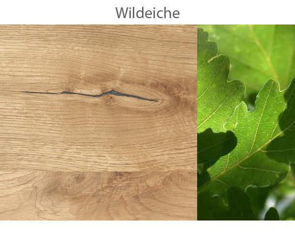 Wildeiche-.jpg
