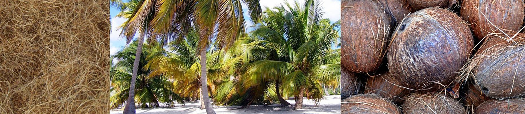 Kokos-Panorama.jpg