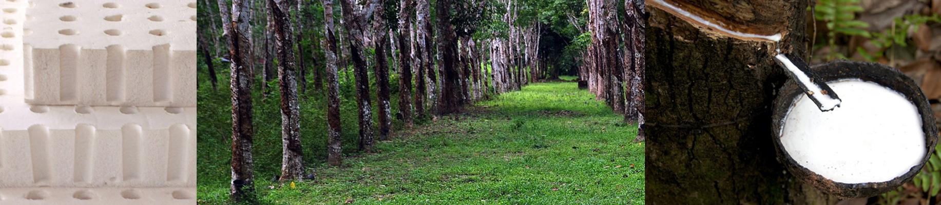 Naturlatex-Panorama.jpg